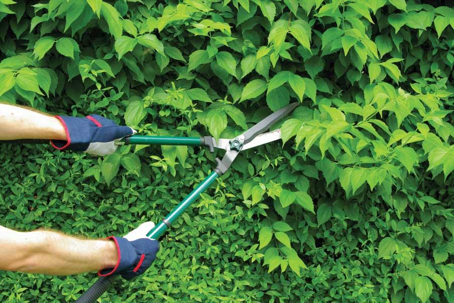 Garden Hand Tools Other
